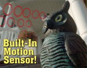 Watch Owl: TeleBrands' Bird Fetish Continues with a Mechanical Guardian Raptor